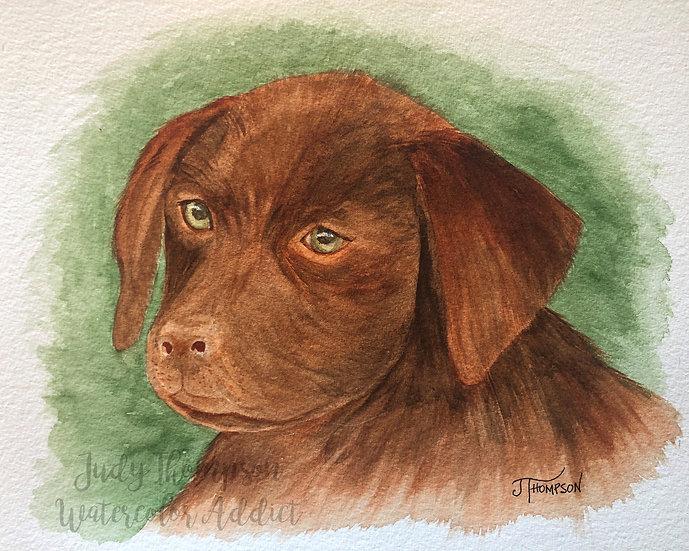 """""""Chocolate Labrador Retriever Puppy"""""""