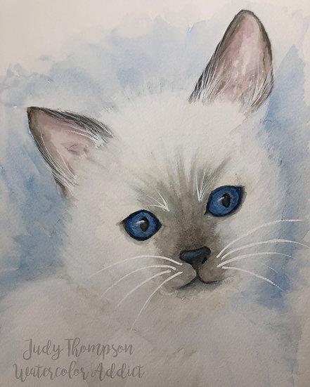 """""""Balinese Kitten"""""""