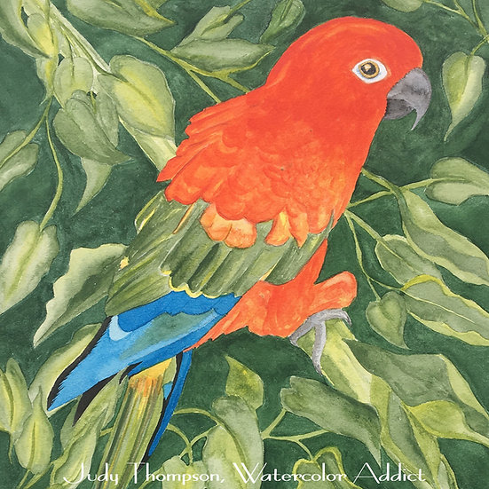 """Red Factor Conure I"""