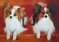 Julienne and Sunny, Judy Thompson's Beloved Dogs