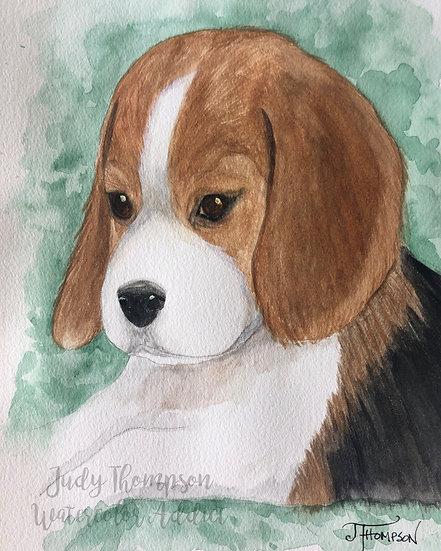 """Beagle Puppy"""