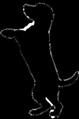 40-407154_boxer-dobermann-cat-pet-sittin