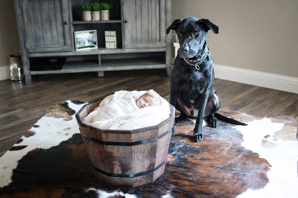 posing a newborn with a dog