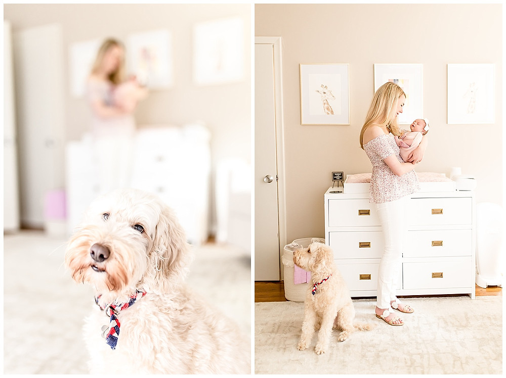 newborn photos with dog