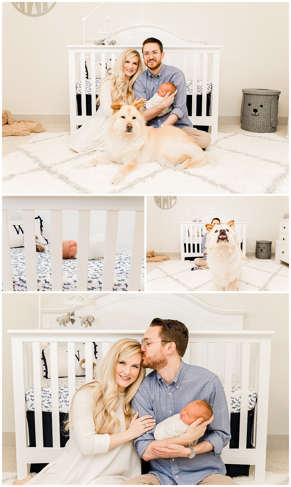 family photo ideas with dog