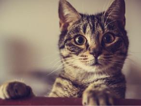 Le chat de Schrödinger et l'ordinateur quantique