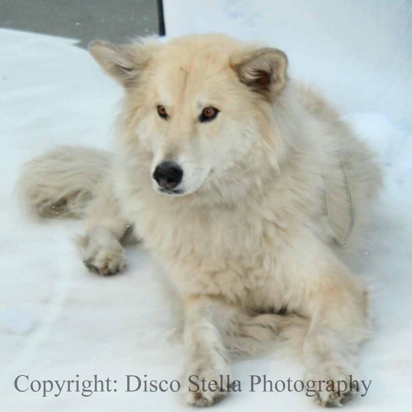 Spirit Wolf - Ootek..
