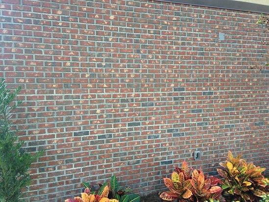 bonita brick wall.jpg