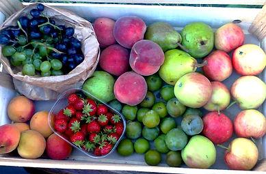 un panir de fruits au bureau