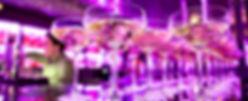 traiteurs soiree evenementielle Paris