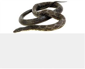 btnComSnake.png