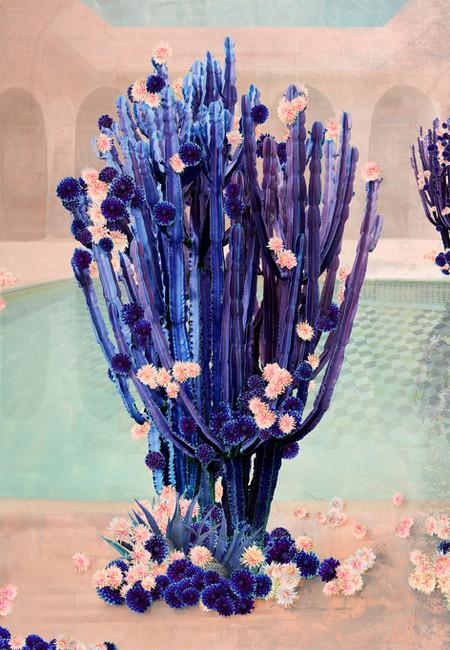 Cactus Swim