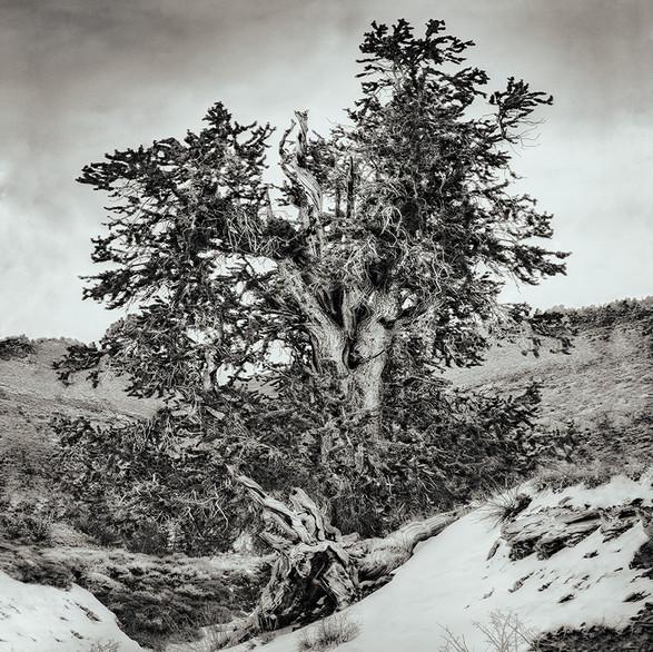 Snowfall and the path to Methuselah
