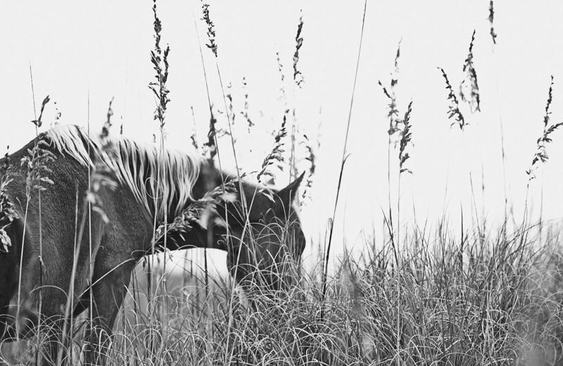 Grey Series Banker Horse
