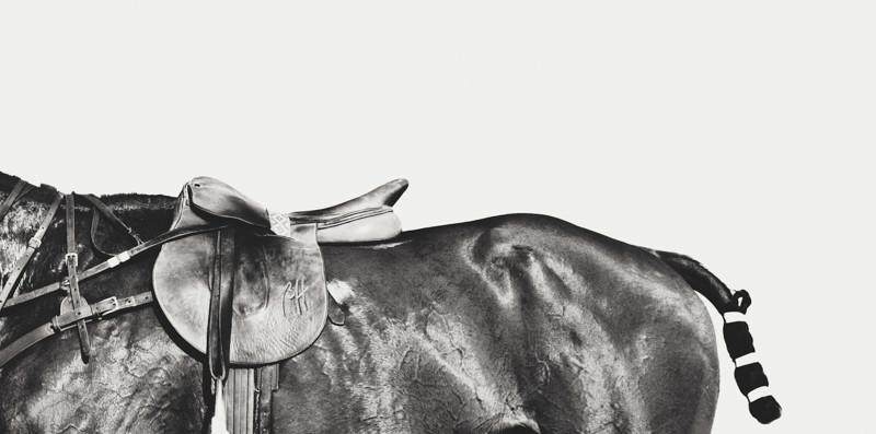 Grey Series Three Quarter Horse