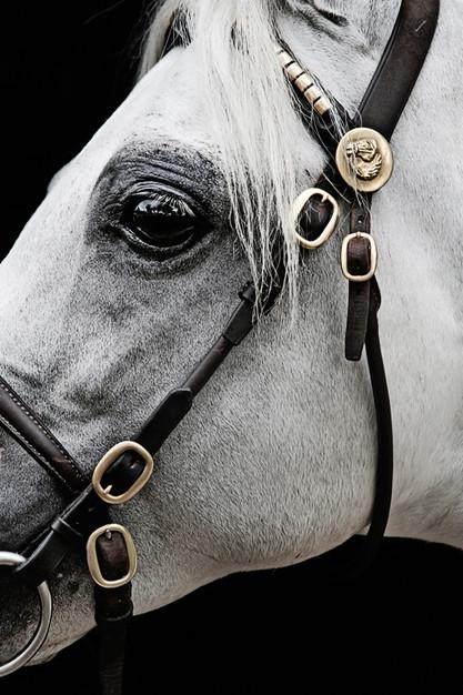 Profile Australian Pony