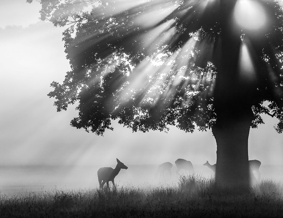 Deer drenched in Light