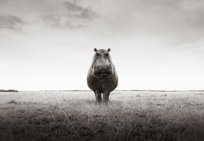 Mr Hippo XL