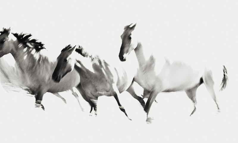 Grey Series Poetry In Motion
