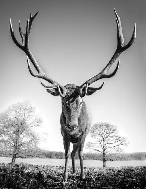 Mega stag