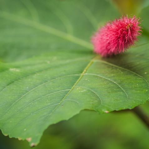 mooi Pluisje op groen blad
