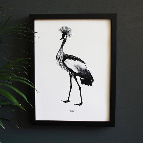 Crane Engravings Art Print