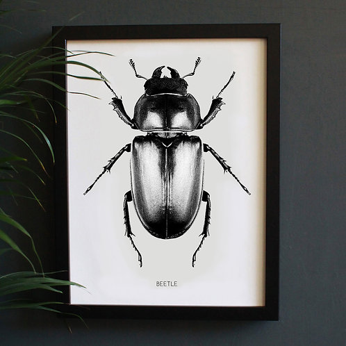 Beetle Engravings Art Print