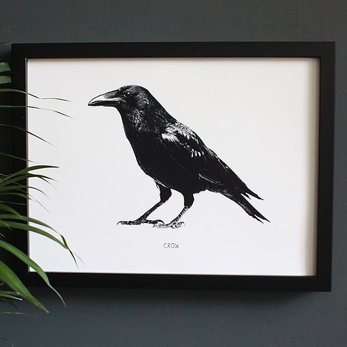 Black Crow Engravings Art Print