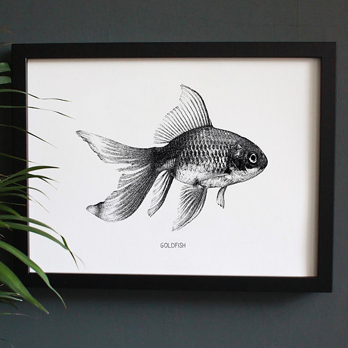 Goldfish Engravings Art Print