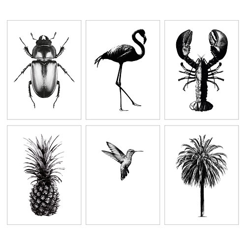 Six Encyclopaedic Illustrated Notelets
