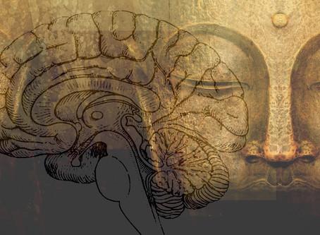 Neurociencia Contemplativa