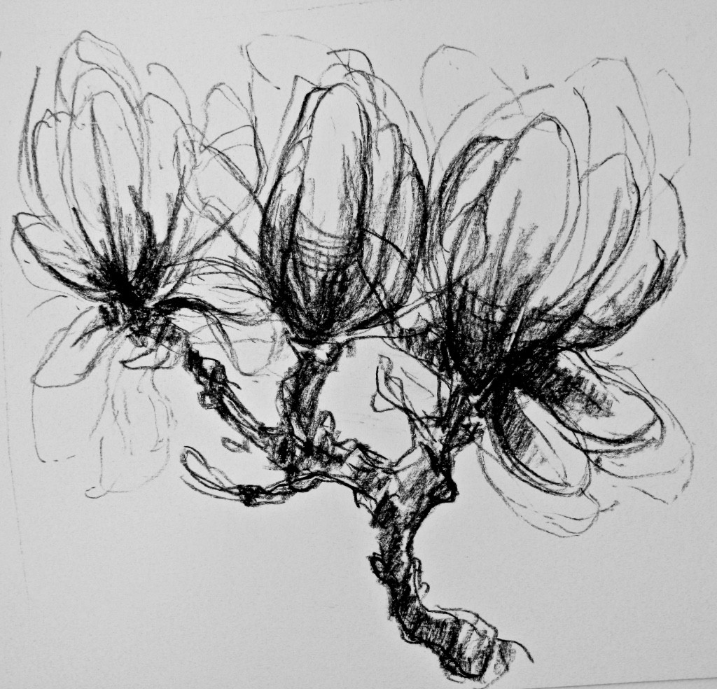 Magnolia _ Traum