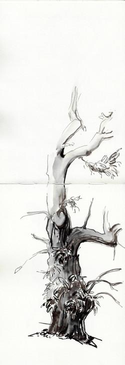 Old chestnut tree, Ardèche