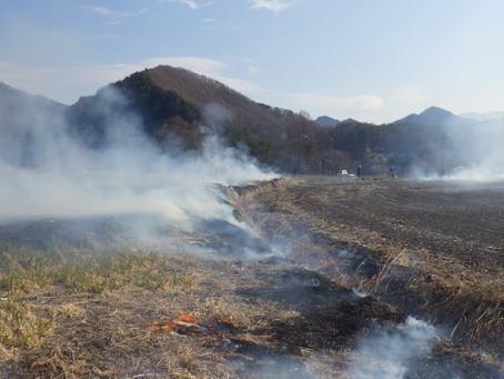 開田、春の始まりを告げる「野焼き」
