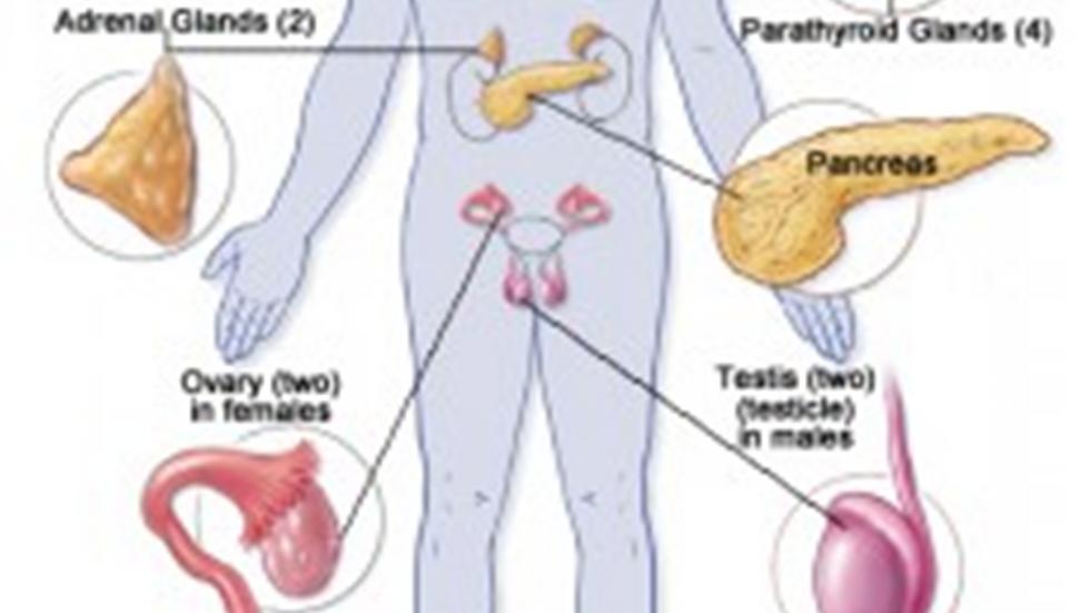 Endocrine System  6 CEU