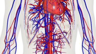 Circulatory System CEU Online