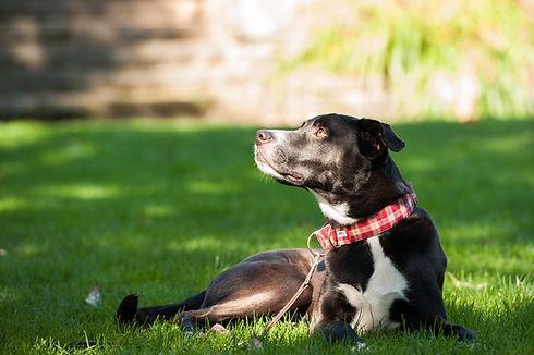 scout dog26.jpg