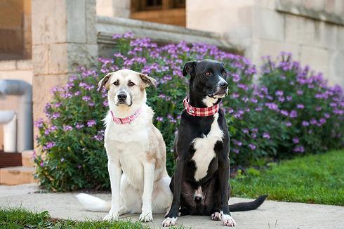 scout dog16.jpg