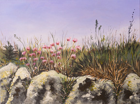 Cornish wall with sea thrift