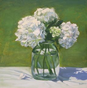 White hydrangeas in the garden