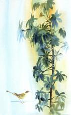 Шефлер и птичка