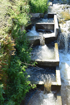 cascade d'eau bassin poisson