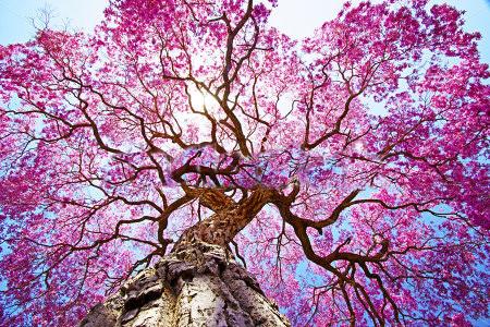 In je Kracht staan en jezelf tot bloei brengen