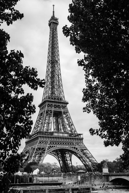 Torre Eiffel entre árboles