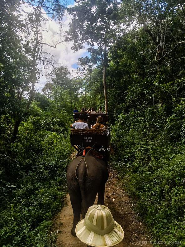 Viaje en elefante