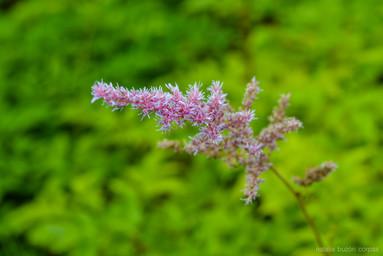 Flores nórdicas