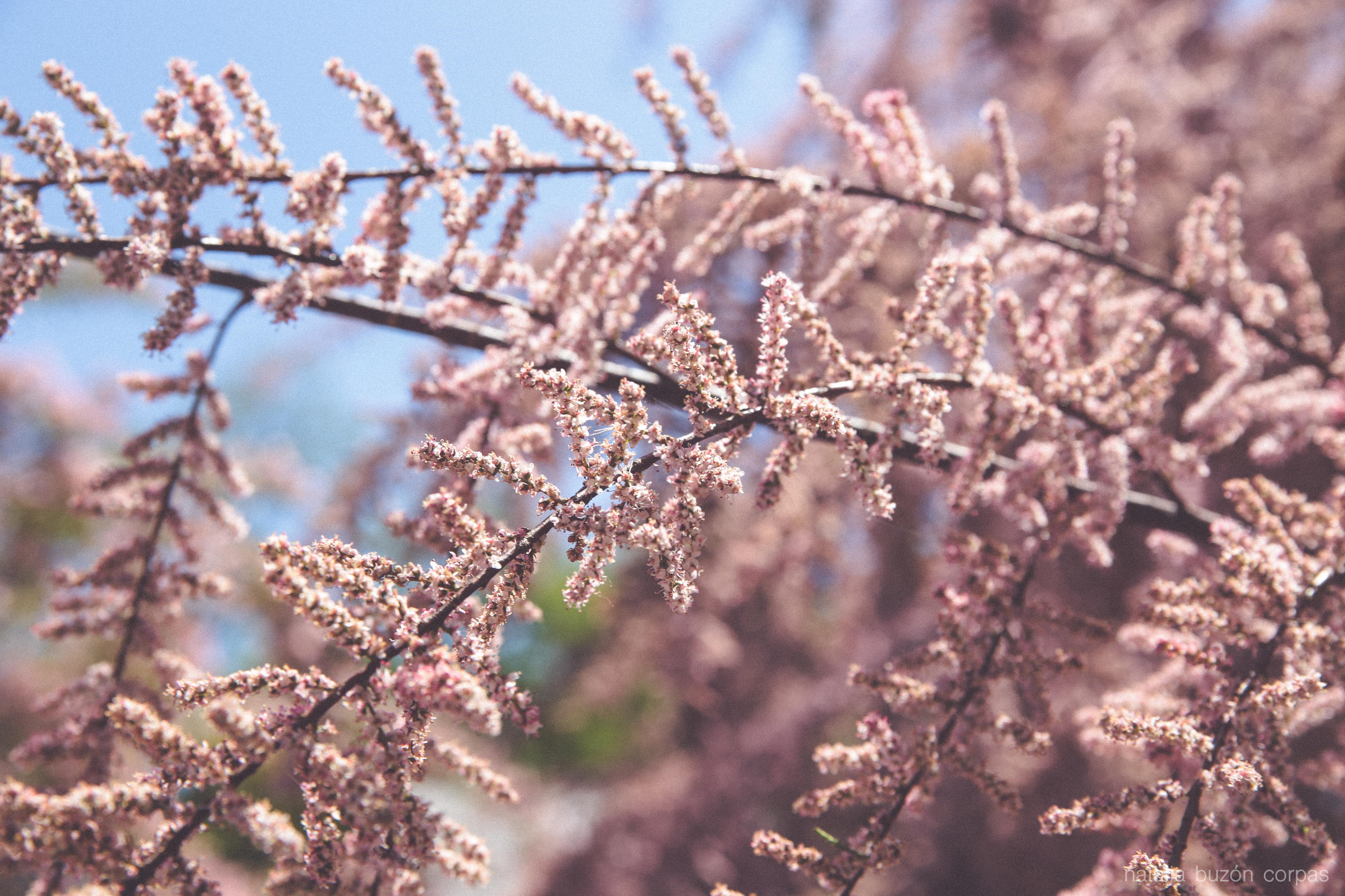 Primavera en Suiza