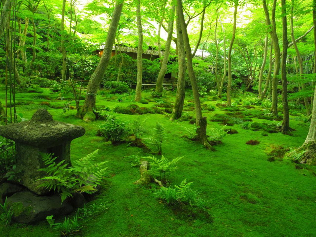 京都 妙心寺