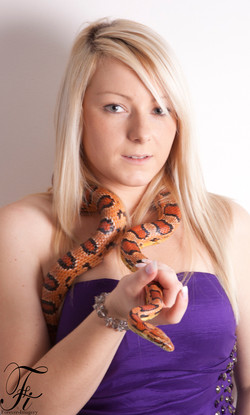 Vindaloo, Corn Snake