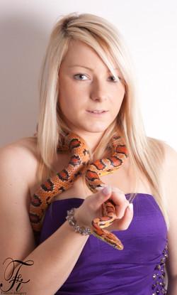Vindaloo, Corn Snake